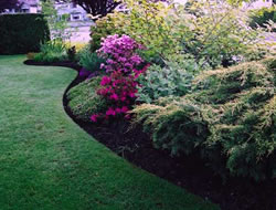 Landscaping Servicein Torrance